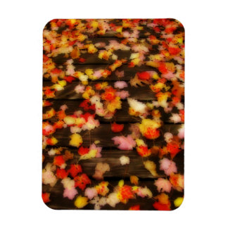 Bright Red Yellow Autumn Maple Leaves Magnet