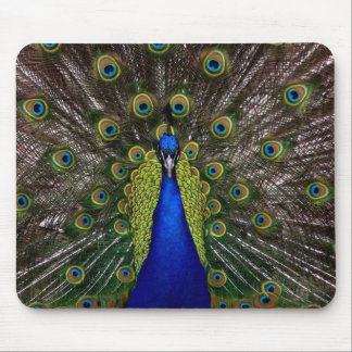 Bright regal peacock bird feather animal photo mouse pad