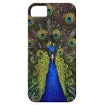 Bright regal peacock photo bird nature print iPhone SE/5/5s case