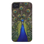 Bright regal peacock photo iphone 4S skin iPhone 4 Case-Mate Cases