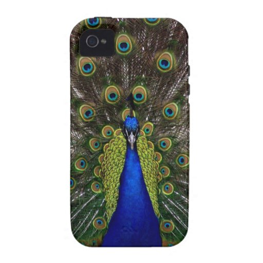 Bright regal peacock photo iphone 4S skin Vibe iPhone 4 Cases
