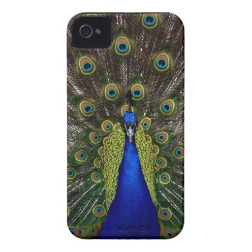 Bright regal peacock photo iphone 4S skin iPhone 4 Case