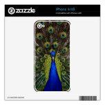 Bright regal pretty as a peacock bird photo skin iPhone 4 skin