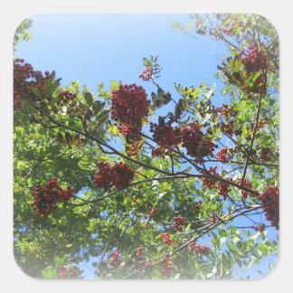 Bright Rowan Sky Square Stickers