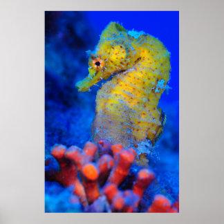 Bright Seahorse   Hippocampus Poster