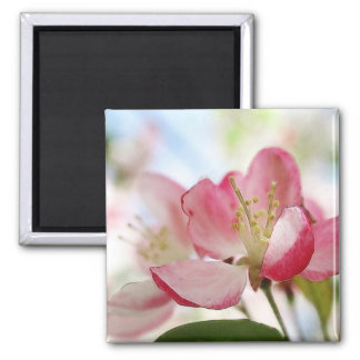 Bright Spring Apple Blossoms 2 Inch Square Magnet