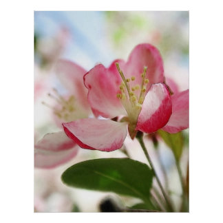 Bright Spring Apple Blossoms Poster