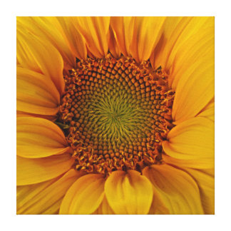 Bright Sunflower Stretched Canvas Print