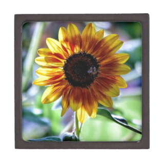 Bright Sunflower - Floral Photography Gift Box