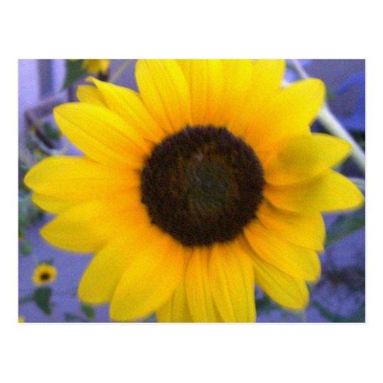 Bright Sunflower Postcard