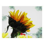 Bright Sunflower Poster Print