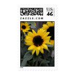 Bright Sunflower stamp