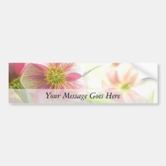 Bright Sunshine On Hellebore Flowers Bumper Sticker