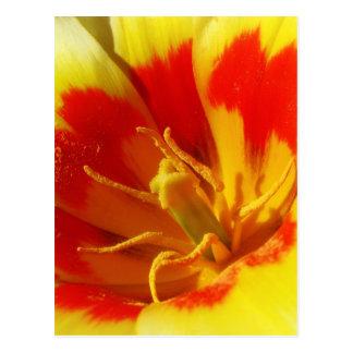Bright Tulip Postcard