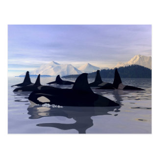 Bright Water Orca Postcard