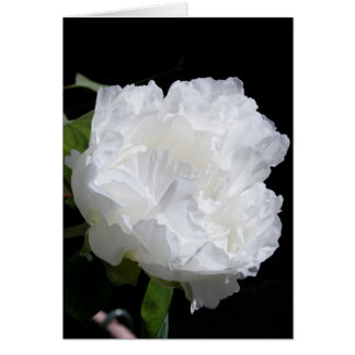 Bright White Peony in the sun Floral Photography Card