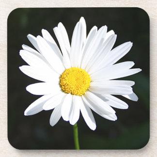 Bright White Shasta Daisy Coaster Set 6
