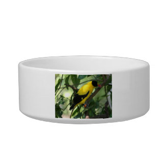 Bright yellow and black bird in tree pet bowl