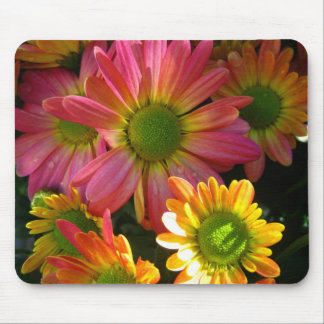 Bright Yellow and Pink Mums in Rain Mouse Pad