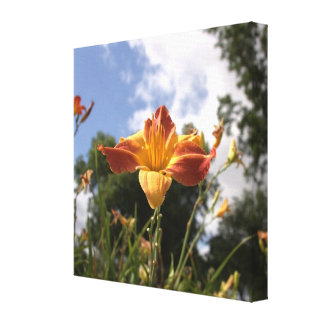 Bright Yellow and Red Daylily: Wide Angle View Canvas Prints