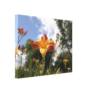 Bright Yellow and Red Daylily: Wide Angle View Canvas Print