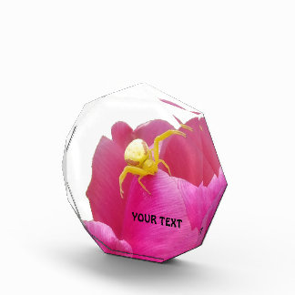 Bright Yellow Crab Spider  Pink Tulip Award