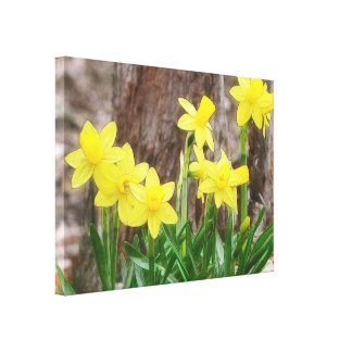 Bright Yellow Daffodils Gallery Wrap Canvas