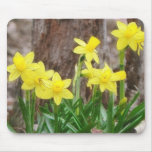 Bright Yellow Daffodils Mouse Pad