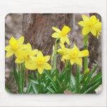 Bright Yellow Daffodils Mousepads