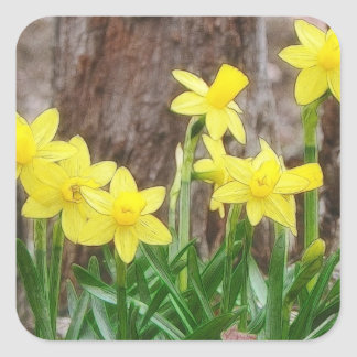 Bright Yellow Daffodils Square Sticker