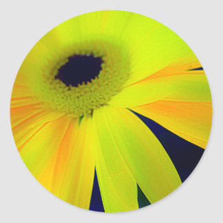 Bright Yellow Daisy Gifts Classic Round Sticker