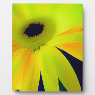 Bright Yellow Daisy Gifts Plaque