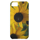 Bright yellow daisy petals cover for iPhone 5C