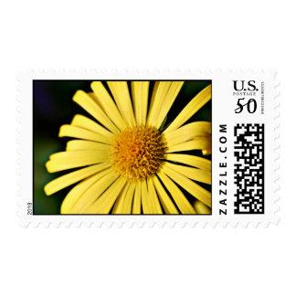Bright Yellow Doronicum flower postage stamps