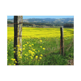 Bright Yellow Fields of Mustard Seed Canvas Print