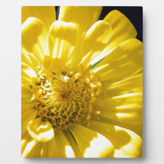 Bright Yellow Flower (Gift) Plaque