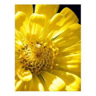 Bright Yellow Flower (Gift) Postcard