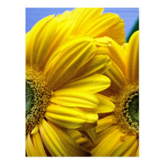 Bright Yellow Flowers (Gift) Postcard