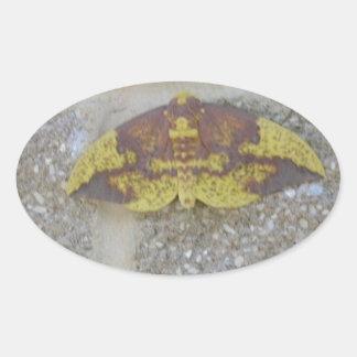 Bright Yellow Green & Brown Moth on Grey Brick Oval Sticker