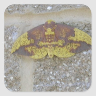 Bright Yellow Green & Brown Moth on Grey Brick Square Sticker