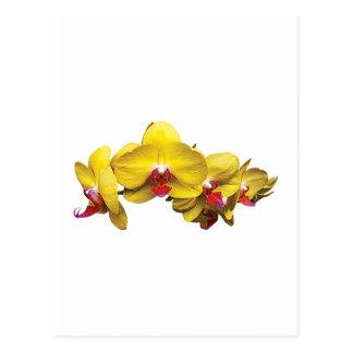 Bright Yellow Phalaenopsis Orchids Postcard