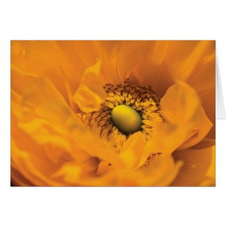 Bright yellow ranunculus blank card