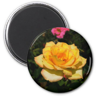 Bright Yellow Rose Magnet