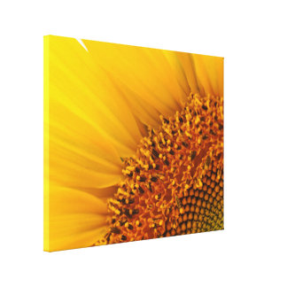 Bright Yellow Sunflower Photography Canvas