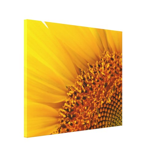 Bright Yellow Sunflower Photography Canvas Canvas Print
