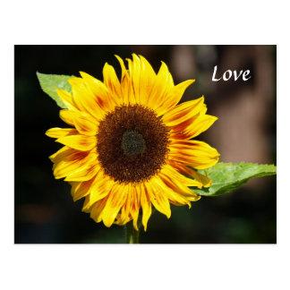 Bright Yellow Sunflower Postcard