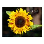 Bright Yellow Sunflower Postcards