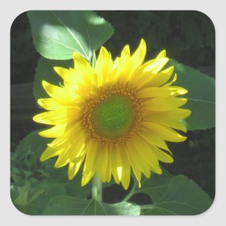 Bright Yellow Sunflower Sticker