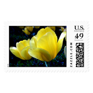 bright yellow tulips stamps