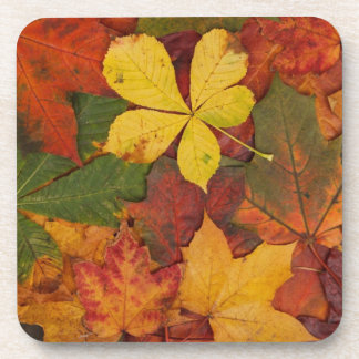Brightly Colored Fall Leaves Beverage Coaster